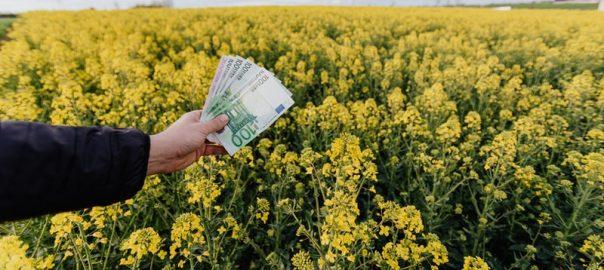 investiranje-v-delnice-za-vlagatelje-zacetnike